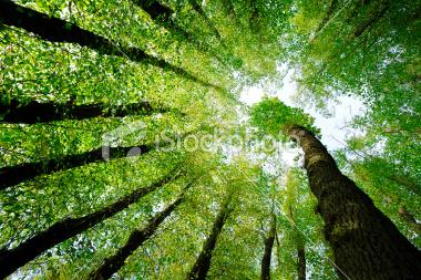 fototapetaistock2.jpg